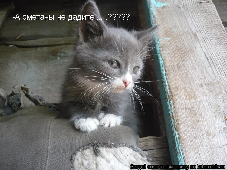Котоматрица: -А сметаны не дадите......?????