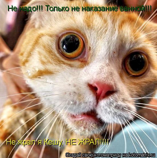 Котоматрица: Не надо!!! Только не наказание ванной!!! Не жрал я Кешу, НЕ ЖРАЛ!!!!
