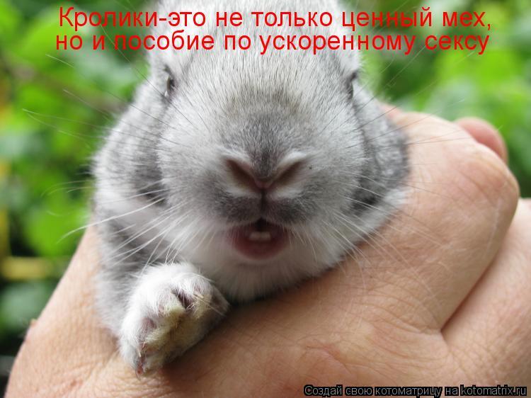 Котоматрица: Кролики-это не только ценный мех, но и пособие по ускоренному сексу