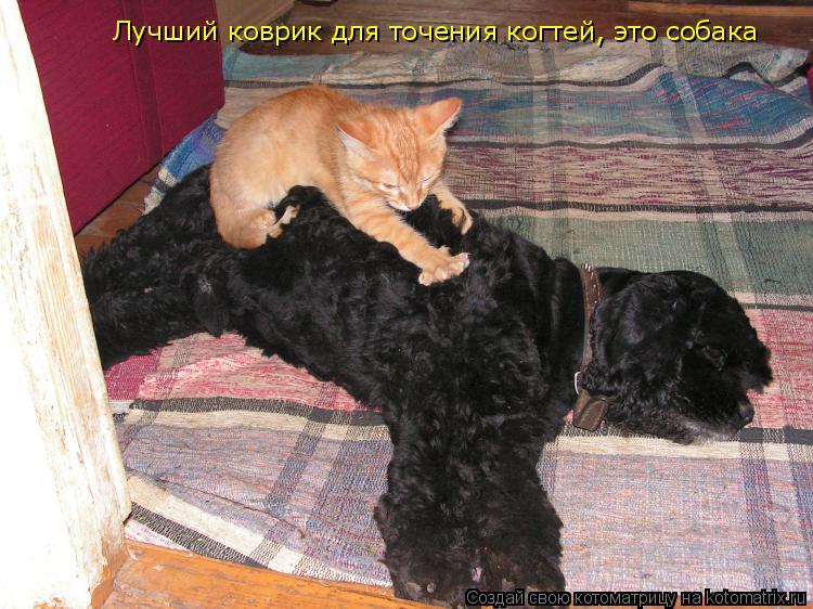 Котоматрица: Лучший коврик для точения когтей, это собака