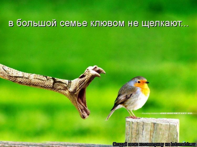 Котоматрица: в большой семье клювом не щелкают...
