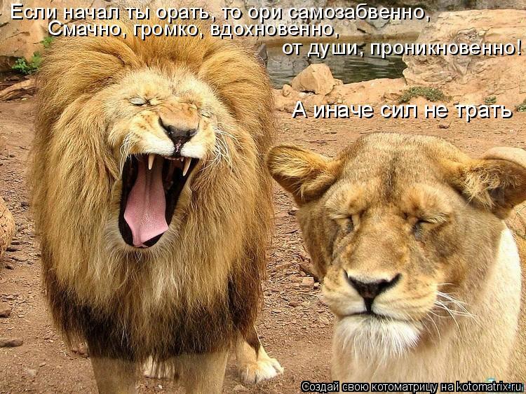 Котоматрица: Если начал ты орать, то ори самозабвенно, Смачно, громко, вдохновенно,  от души, проникновенно! А иначе сил не трать