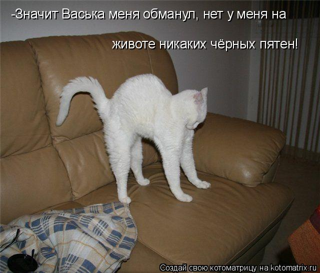 Котоматрица: -Значит Васька меня обманул, нет у меня на  животе никаких чёрных пятен!