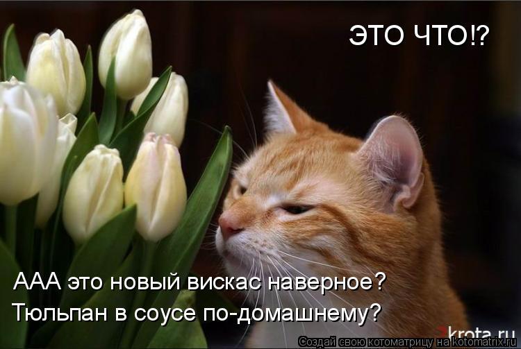 Котоматрица: ЭТО ЧТО!? ААА это новый вискас наверное? Тюльпан в соусе по-домашнему?