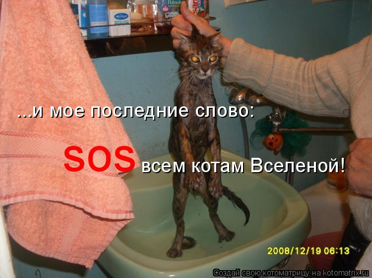 Котоматрица: ...и мое последние слово:  sos всем котам Вселеной!