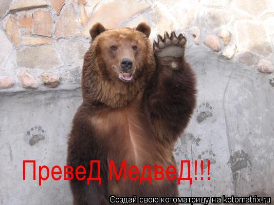 Котоматрица: ПревеД МедвеД!!!