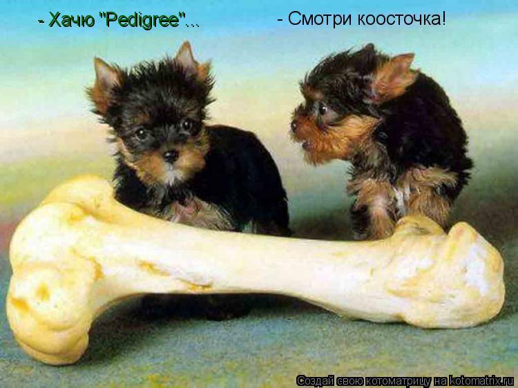 "Котоматрица: - Смотри коосточка! - Хачю ""Pedigree""..."