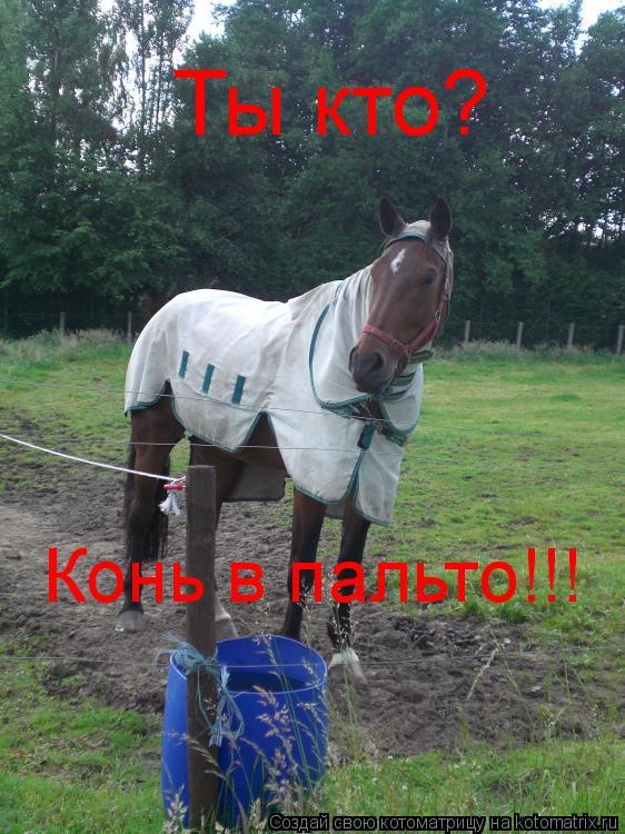Котоматрица: Ты кто? Конь в пальто!!!