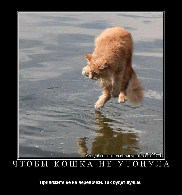 Котоматрица: Чтобы кошка не утонула Привяжите её на веревочки. Так будет лучше.