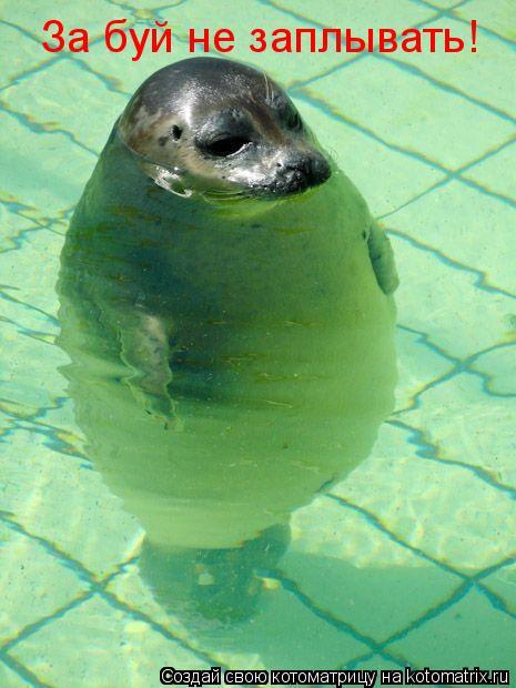 Котоматрица: За буй не заплывать!