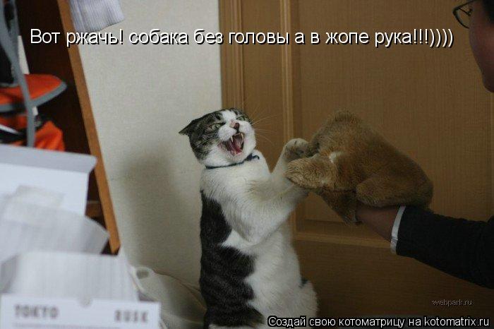 Котоматрица: Вот ржачь! собака без головы а в жопе рука!!!))))
