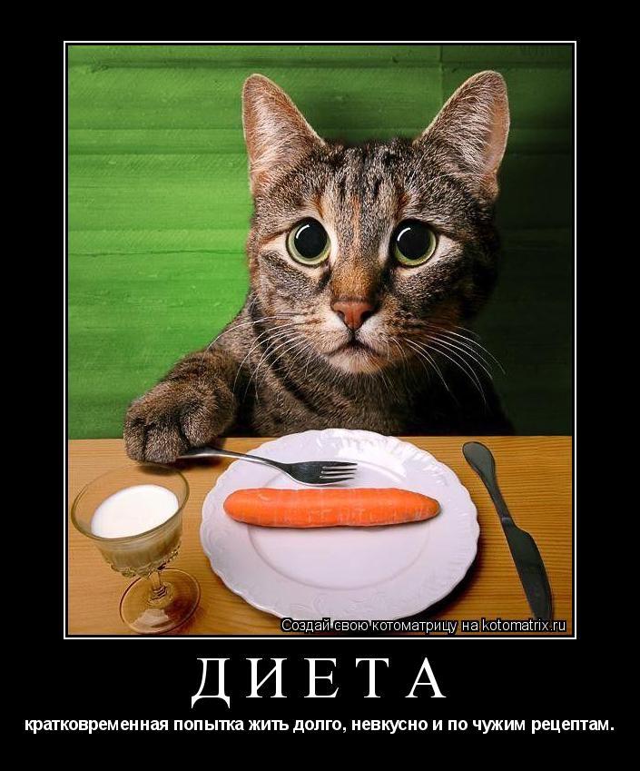 Котоматрица: Диета  кратковременная попытка жить долго, невкусно и по чужим рецептам.