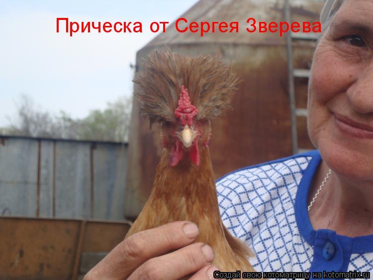 Котоматрица: Прическа от Сергея Зверева