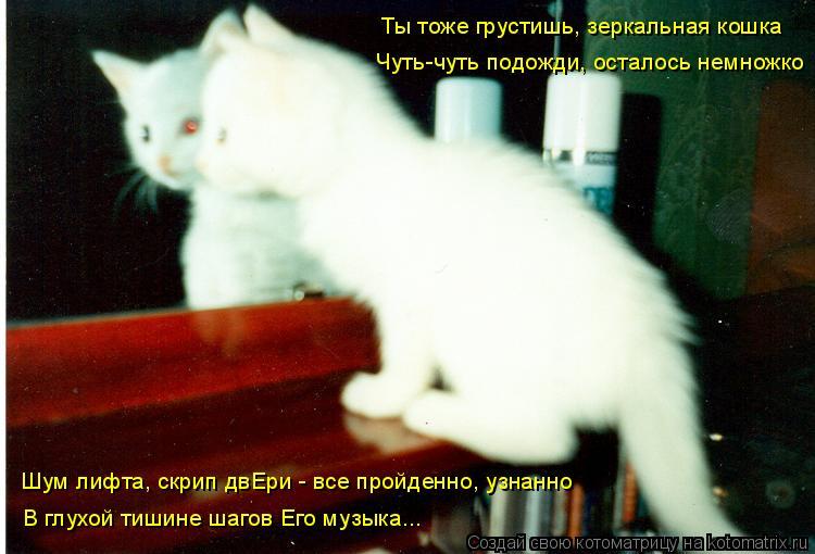 Котоматрица: Ты тоже грустишь, зеркальная кошка Чуть-чуть подожди, осталось немножко Шум лифта, скрип двЕри - все пройденно, узнанно В глухой тишине шаго