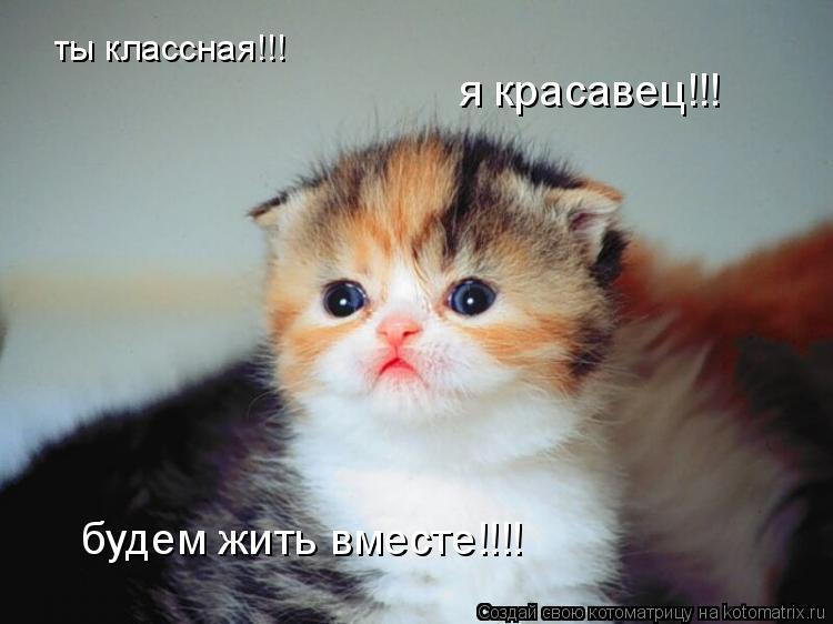 Котоматрица: ты классная!!! я красавец!!! будем жить вместе!!!!