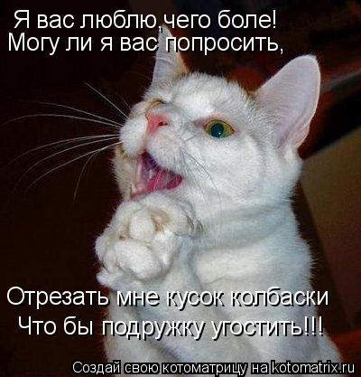 Котоматрица: Я вас люблю,чего боле! Могу ли я вас попросить, Отрезать мне кусок колбаски Что бы подружку угостить!!!