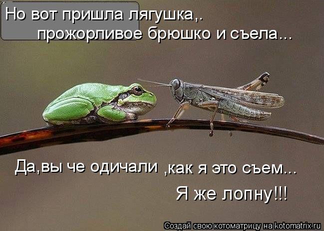 Котоматрица: Но вот пришла лягушка,. прожорливое брюшко и съела... Да,вы че одичали Я же лопну!!! ,как я это съем...