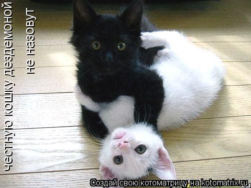 Котоматрица: честную кошку дездемоной не назовут