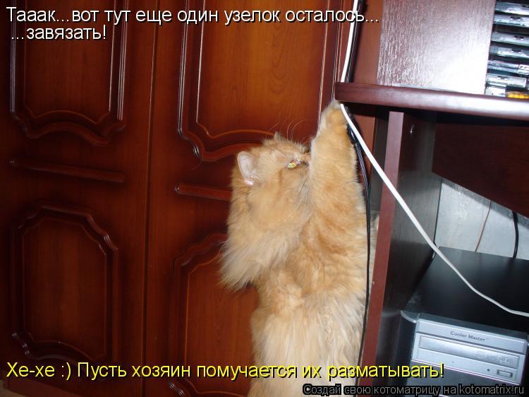 Котоматрица: Тааак...вот тут еще один узелок осталось... ...завязать! Хе-хе :) Пусть хозяин помучается их разматывать!