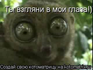 Котоматрица: Ты взгляни в мои глаза!)))