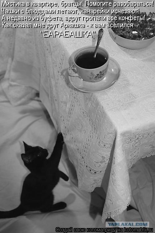 Котоматрица: Чашки с блюдцами летают, канарейки исчезают! Мистика в квартире, братцы! Помогите разобараться! А недавно из буфета, вдруг пропали все конфе