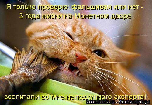 Котоматрица: Я только проверю: фальшивая или нет - 3 года жизни на Монетном дворе воспитали во мне неподкупного эксперта!