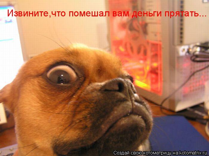 Котоматрица: Извините,что помешал вам деньги прятать...