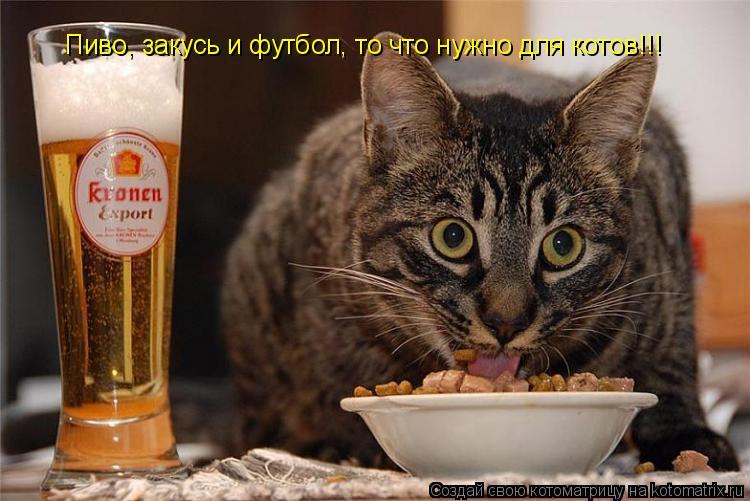 Котоматрица: Пиво, закусь и футбол, то что нужно для котов!!!