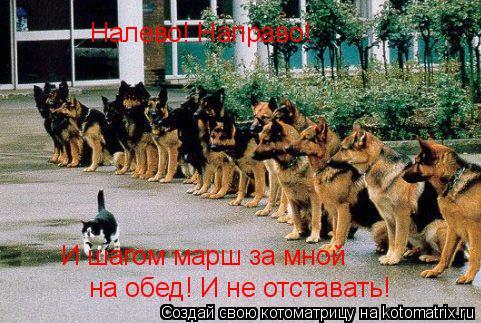 Котоматрица: на обед! И не отставать! И шагом марш за мной Налево! Направо!