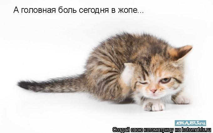 Котоматрица: А головная боль сегодня в жопе...