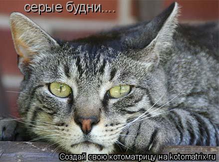 Котоматрица: серые будни....