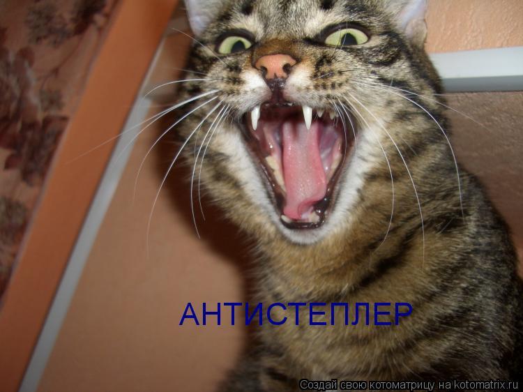 Котоматрица: АНТИСТЕПЛЕР