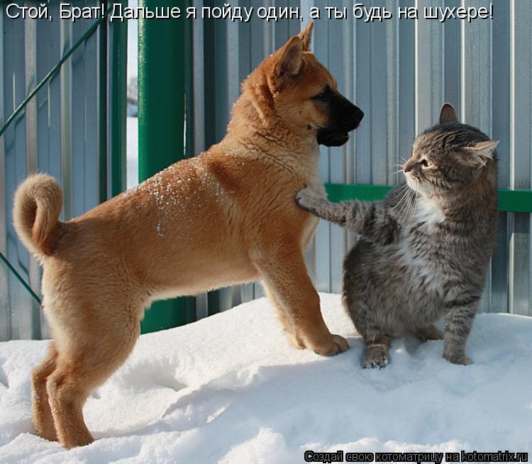 Котоматрица: Стой, Брат! Дальше я пойду один, а ты будь на шухере!