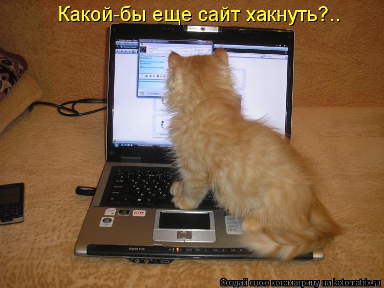 Котоматрица: Какой-бы еще сайт хакнуть?..