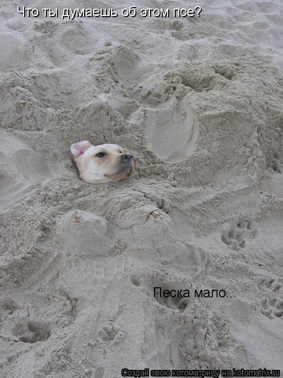 Котоматрица: Что ты думаешь об этом псе? Песка мало...