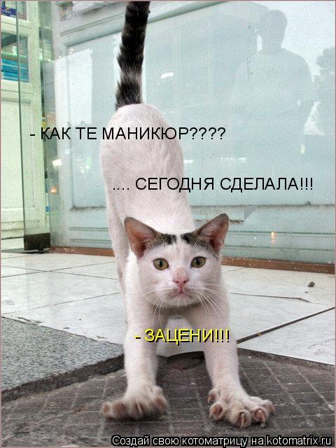 Котоматрица: - КАК ТЕ МАНИКЮР???? .... СЕГОДНЯ СДЕЛАЛА!!! - ЗАЦЕНИ!!!
