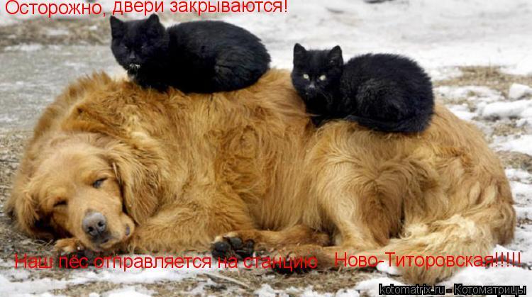 Котоматрица: Осторожно, двери закрываются! Наш пёс отправляется на станцию Ново-Титоровская!!!!!