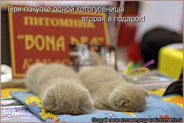 Котоматрица: При покупке одной котогусеницы вторая в подарок!