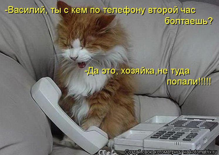 Котоматрица: -Василий, ты с кем по телефону второй час болтаешь? -Да это, хозяйка,не туда попали!!!!!
