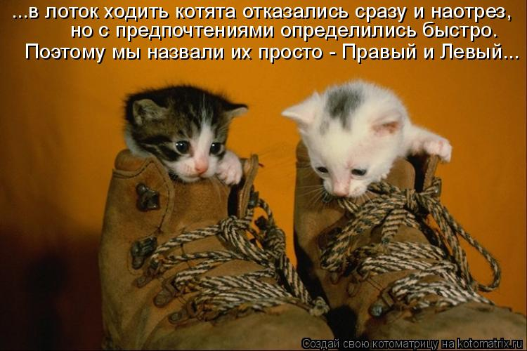 Котоматрица: ...в лоток ходить котята отказались сразу и наотрез, но с предпочтениями определились быстро. Поэтому мы назвали их просто - Правый и Левый...