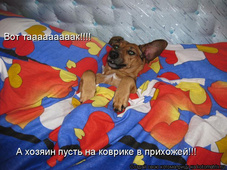 Котоматрица: Вот тааааааааак!!!! А хозяин пусть на коврике в прихожей!!!