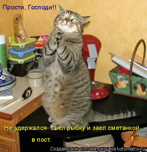 Котоматрица: Прости, Господи!! Не удержался- съел рыбку и заел сметанкой  в пост.