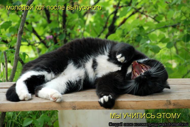 Котоматрица: молодой кот после выпускного МЫ УЧИЛИСЬ ЭТОМУ