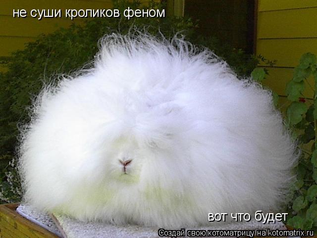 Котоматрица: не суши кроликов феном вот что будет