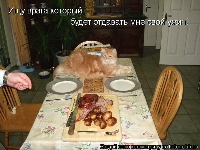 Котоматрица: Ищу врага котoрый  будет отдавать мне свой ужин!