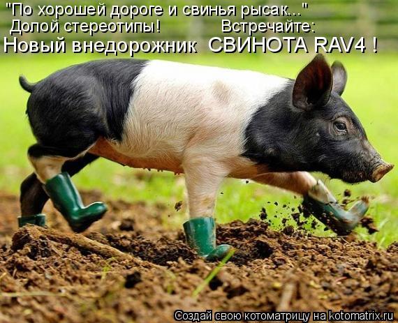 """Котоматрица: """"По хорошей дороге и свинья рысак..."""" Долой стереотипы!             Встречайте: Новый внедорожник  СВИНОТА RAV4 !"""