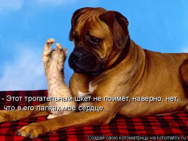 Котоматрица: - Этот трогательный шкет не поймёт, наверно, нет, что в его лапках моё сердце...