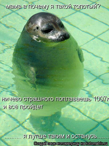 Котоматрица: мама а почему я такой толстый? ничево страшного поплаваешь 1007км  и всё пройдет .......... я лутше таким и останусь........