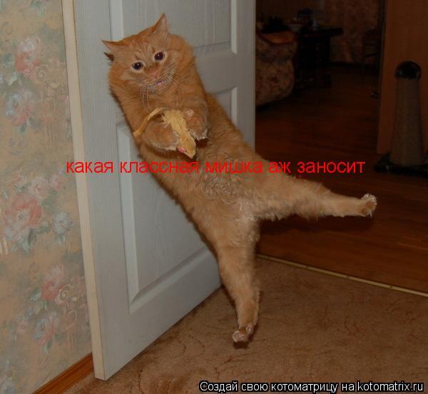 Котоматрица: какая классная мишка аж заносит