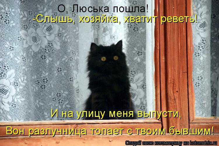 Котоматрица: О, Люська пошла! -Слышь, хозяйка, хватит реветь! И на улицу меня выпусти,  Вон разлучница топает с твоим бывшим!